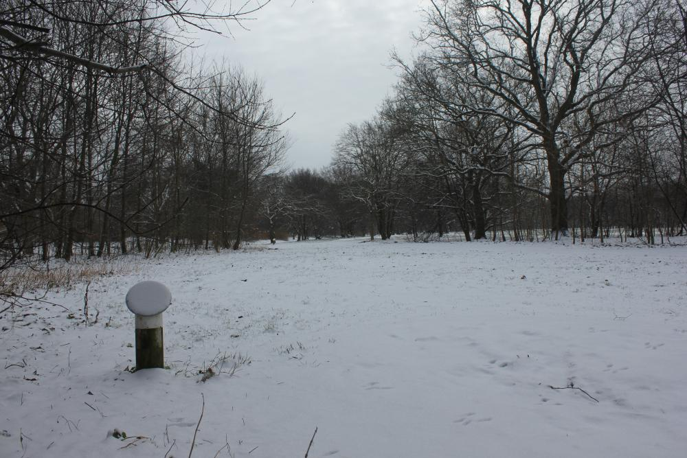Valbyparken Disc Golf Park